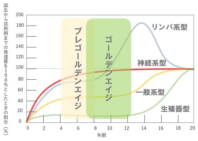 スキャモンの発育曲線図YSC1